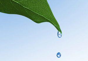 5 rimedi naturali per depurare l'organismo